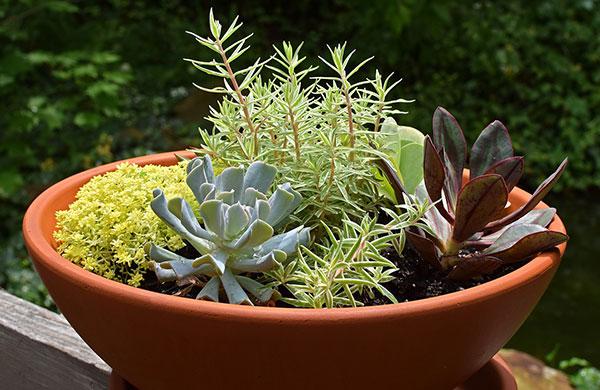 5 Spring Gardening Ideas   My Cosy Retreat